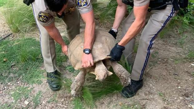 A tortoise was rescued by road police in California (California Highway Patrol/PA)