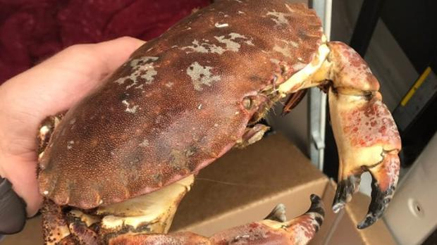 The abandoned crab (RSPCA/PA)