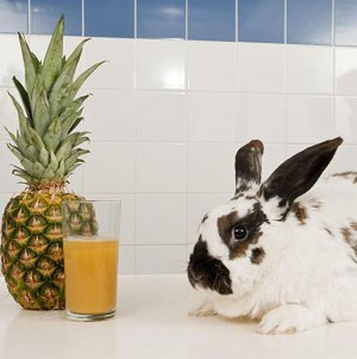 Finbar the rabbit was treated with pineapple juice after a giant furball was found in his stomach (Nick McGowan-Lowe Photography)