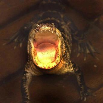 Almost one in five reptiles is facing extinction, according to a new report