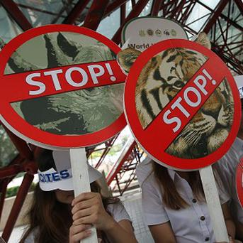 Activists hold signs against illegal wildlife trade during the Convention on International Trade in Endangered Species in Bangkok (AP)