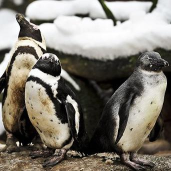 The Overseas Territories are home to many threatened species as well as breeding populations of penguin, seal and albatross on South Georgia