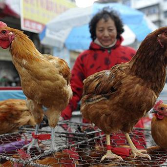 A lesser strain of bird flu has killed humans in China for the first time (AP)