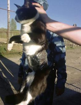 Guards show a cat which they catch on clandestine mission at the Penal Colony No. 1 near the city of Syktyvkar in the Komi province, 1,000 kms northeast of Moscow, Russia