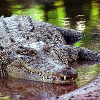 An Australian man was swimming across the Northern Territory's Mary River when a 15ft crocodile clamped its jaws around his chest