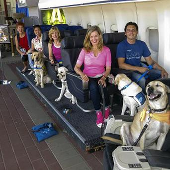 Dog owners and their pets in the simulator (AP)