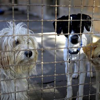 Hundreds of dogs have died after eating the suspect pet food.