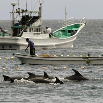 The hunting of dolphins by Japanese fishermen has been criticised by animal rights activists