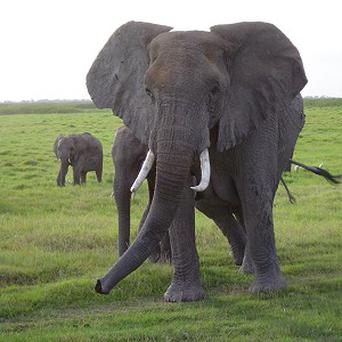 A US tourist in Thailand has been trampled to death by elephants