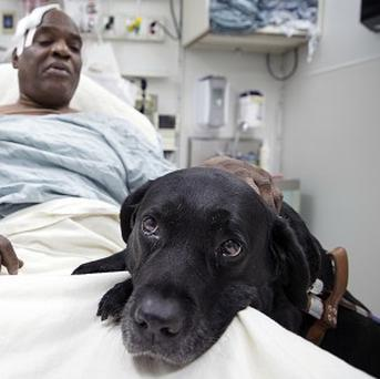 Cecil Williams with guide dog Orlando at his hospital bed after his fall on to tube train tracks in New York (AP)