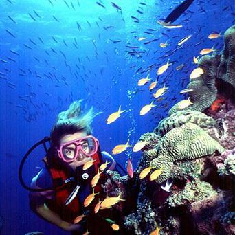 A diver swims on Australia's Great Barrier Reef (AP)