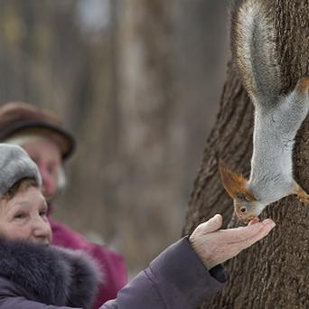 A woman feeds a squirrel in a Moscow park (AP)