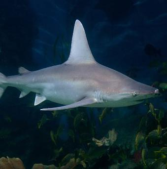 A spear fisherman has been killed by a shark