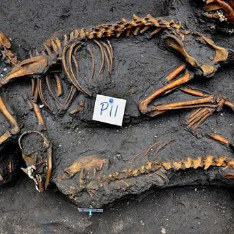 Canine skeletons unearthed by investigators in Mexico City where archaeologists say they have discovered