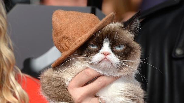 Grumpy Cat arriving at the MTV Movie Awards in Los Angeles.