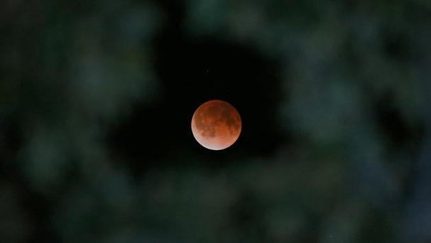 The Earth's shadow is cast over the surface of the Moon as a total lunar eclipse is seen through a Magnolia tree top in the sky over Tyler, Texas (AP/Dr Scott M Lieberman)