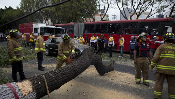 Firefighters cut apart a fallen tree that took down power lines and landed on a car, after an earthquake shook Mexico City (AP)