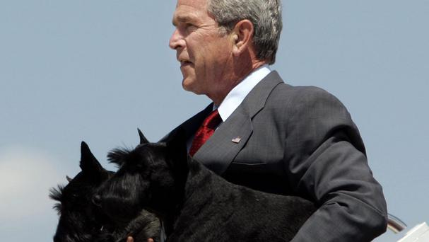 President George W Bush carrying his two dogs, Barney, foreground, and Miss Beazley, background, in 2006