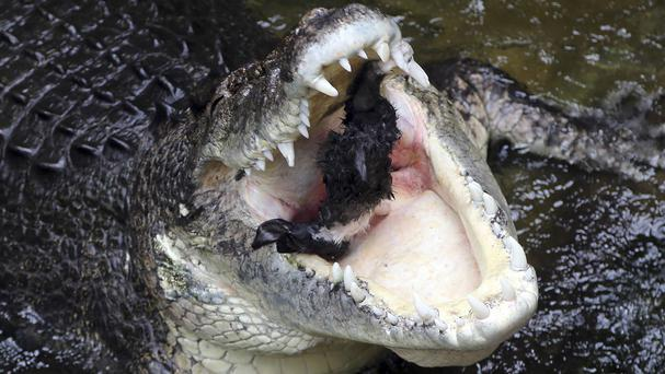 A 62 year old man was snatched from a boat by a saltwater crocodile