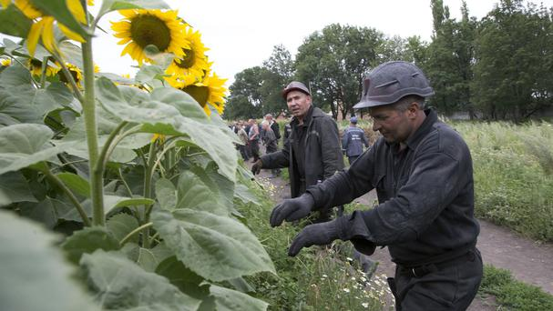 Ukrainian coal miners search the site of the crashed Malaysia Airlines passenger plane (AP/Dmitry Lovetsky)