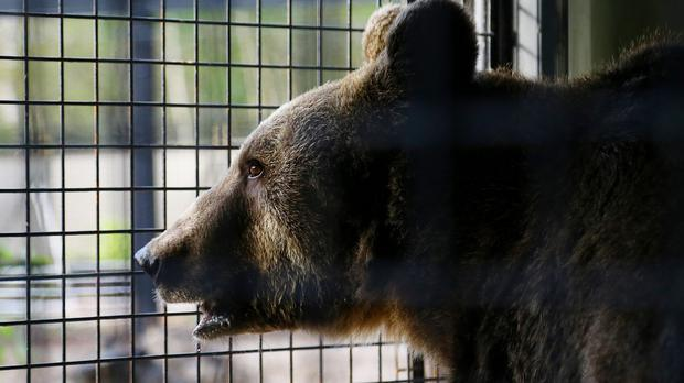 Darsh Patel was killed by a bear while hiking in the Apshawa Preserve in September