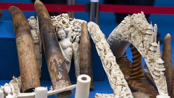 Ivory products are prepared for destruction during a ceremony in Beijing (AP Photo/Ng Han Guan)
