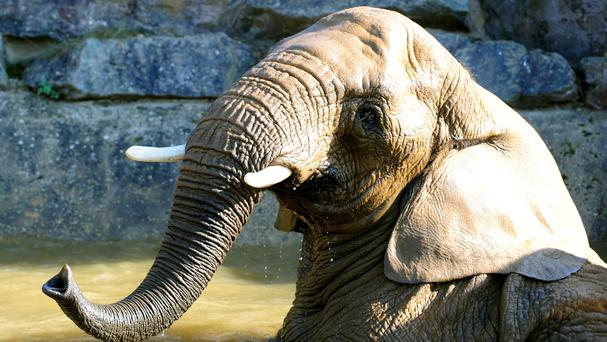 An escaped circus elephant has killed a man after attacking him in Germany
