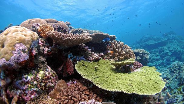 The UN is concerned over the Great Barrier Reef