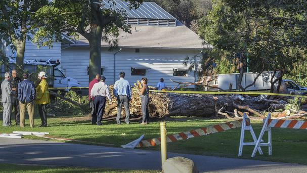 Witnesses say the tree made a cracking sound and came down on children just as a summer day camp at the museum was letting them out for the day (The Pasadena Star-News/AP)