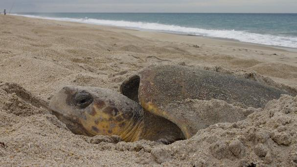 A woman has been arrested in Florida over claims she 'rode' a sea turtle