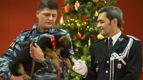 A Russian police officer holds the puppy, named Dobrynya. (AP)