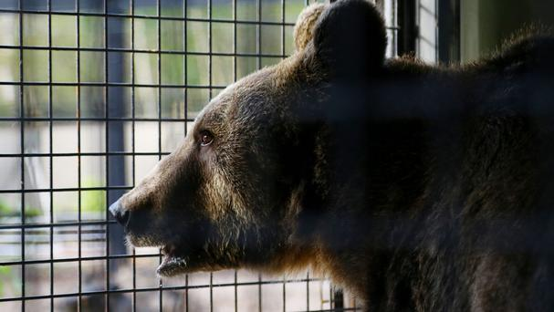 Mr Wagner was leading a group of 11 students and two teaching assistants when he was attacked by a bear with cubs