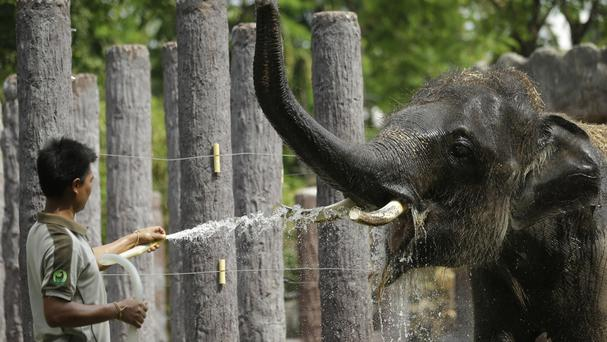 An elephant is being sprayed with water to cool off at Dusit Zoo in Bangkok, Thailand (AP)