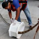 Rescue workers remove a python from a toilet outside a home in Chachoengsao, Thailand (AP)