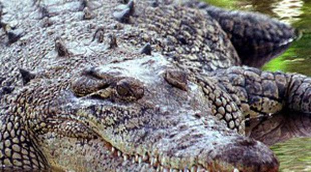 The woman died after being attacked by the croc