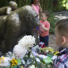 A boy brings flowers to put beside a statue of a gorilla outside the Gorilla World exhibit at Cincinnati Zoo & Botanical Garden (AP)