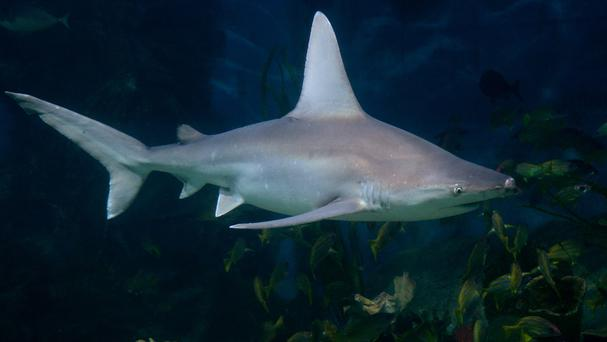 A shark had been seen in the area earlier in the day