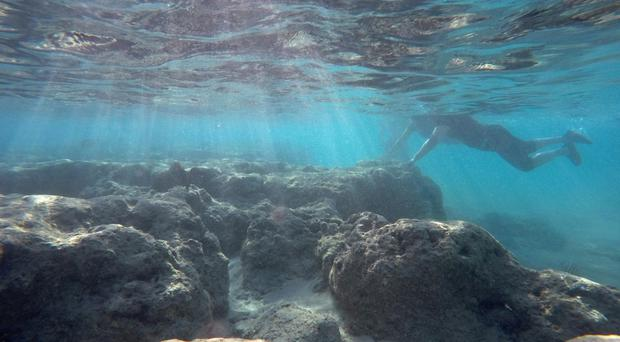 A man rests his hand on a dead reef as he snorkels in Oahus Hanauma Bay near Honolulu (AP)