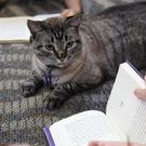 Browser the cat sits among a group of children being read to in the public library in White Settlement, Texas (AP)