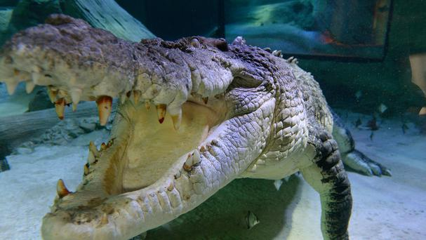 It was the second crocodile attack in Tamarindo in the space of a few months