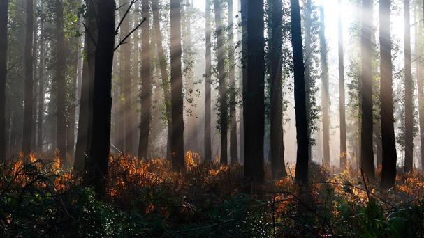 Currently, only 2pc of Ireland's land mass is covered with native trees. Stock Image