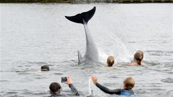 People take pictures of a dolphin near Kiel, Germany (AP)