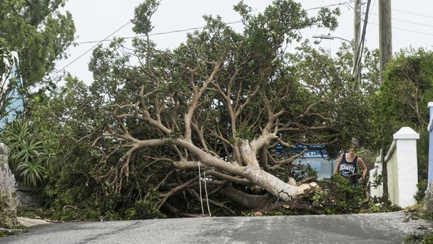 A resident attempts to pass a tree downed by the high winds of Hurricane Nicole in St Georges (AP)