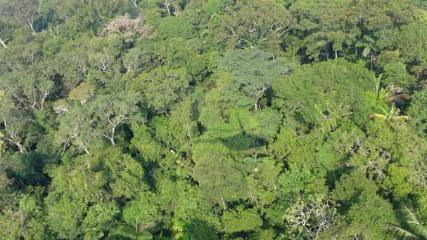 The military helicopter went missing in the Amazon rainforest in Venezuela