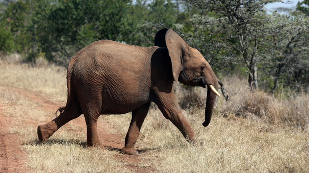 Zimbabwe's government has said it needs to sell wildlife to support its people