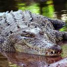 It was the first fatal crocodile attack in Australia since May last year