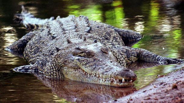 Man killed by crocodile at Cahill's Crossing