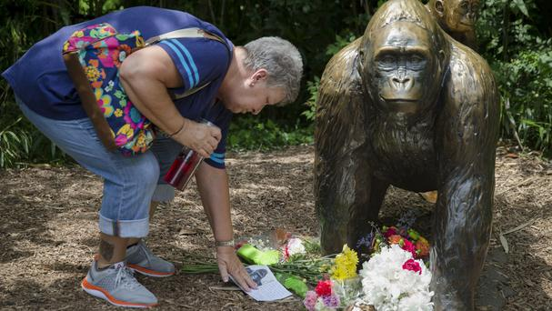 A sympathy card beside a gorilla statue at the Cincinnati Zoo & Botanical Garden (John Minchillo/AP)