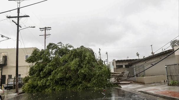 Downed trees and power lines near near a school in central Los Angeles as a major Pacific storm lashed Southern California (AP Photo/Nick Ut)