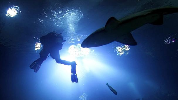 The 26-year-old was bitten repeatedly on a leg as he dived near Hinchinbrook Island off the coast of Queensland state on Saturday